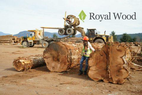 Заготовка лучшей в мире древесины для строительства элитных деревянных домов — красного канадского кедра
