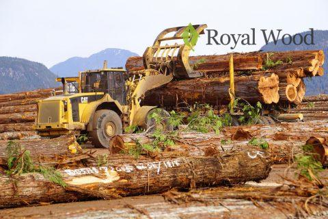 Видео! Заготовка и сортировка красного и желтого кедра в Канаде